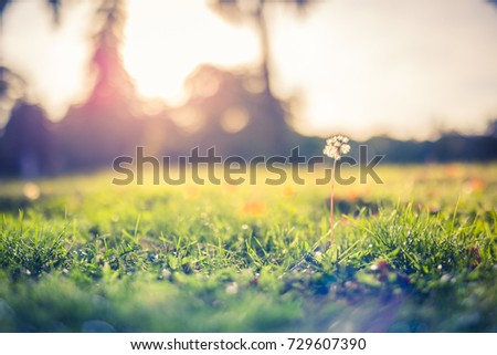 Abstract autumn background with colorful sunset and sun rays for relaxing mood. Green grass and a dandelion