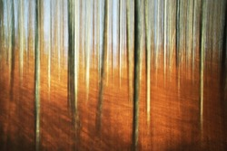 abstract autumn forest