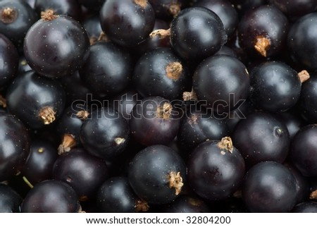 Abstract background: blackcurrants closeup - stock photo