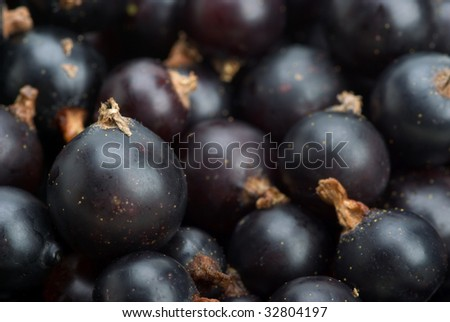 Abstract background: blackcurrants closeup. Focused on berri in lower left corner
