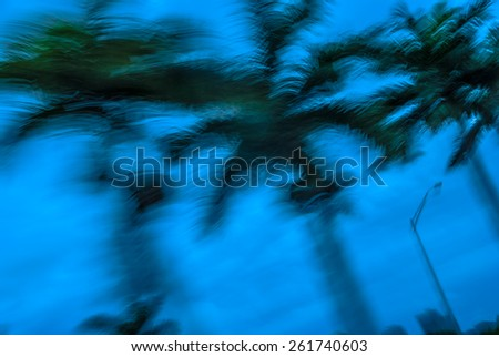 Abstract background blur palm leaves in motion during tropical hurricane  \ Stormy weather motion blur palm trees against blue sky during Florida hurricane for blog magazine poster book cover
