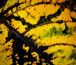 abstract background detail autumn leaf texture yellow green