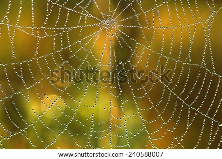 Stock Photo abstract background from a web shine in the sun