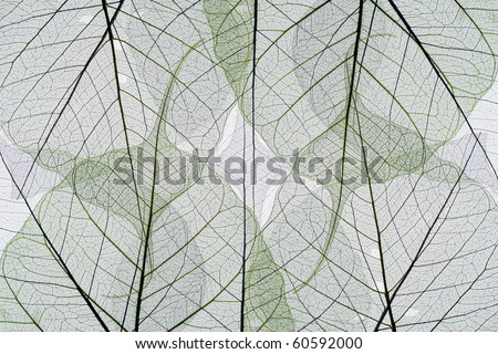 Abstract background from autumn leaves