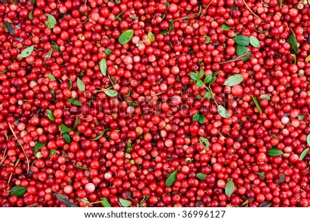 Abstract background from fresh cowberry