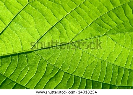 abstract background from green leaf texture