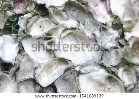 Abstract background from shells, The remains of shells for background, The remains of shells on the stone and the seashore, Shells old stone, the oysters attached on the rock at the seashore