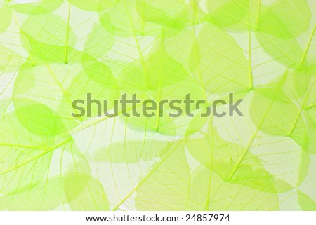 Abstract background made of green transparent leaves