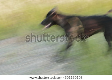 Abstract background. Motion blurred running black dog in autumnal park.