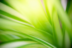 Abstract background nature view of green leaf with copy space using as background natural green plants landscape, ecology, fresh wallpaper concept.