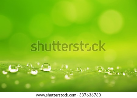 Stock Photo Abstract background of a green leaf texture and water drops