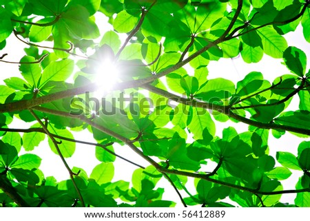 Abstract background of backlit green leaves with sun shining through and flare