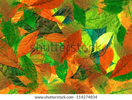 Abstract background of colorful autumn leaves