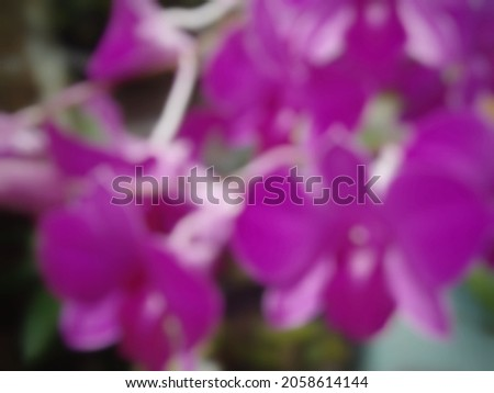 abstract background of defocused orchid flower