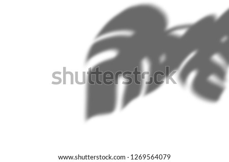 abstract background of exotic shadows branch leaves on a white wall. White and Black for overlay a photo or mockup