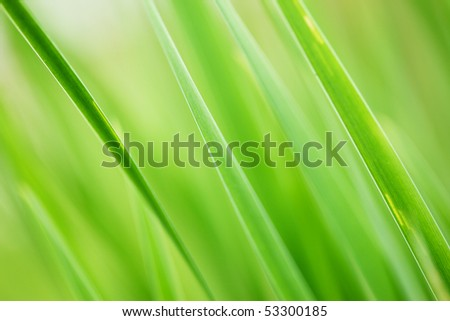Abstract background of fresh green grass. Extreme close-up, shallow DOF.