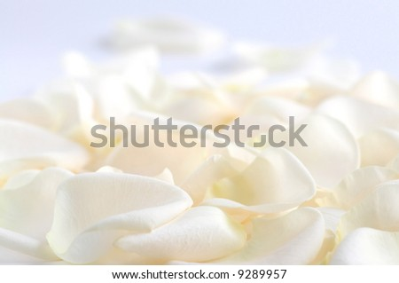 Abstract background of fresh pale rose petals