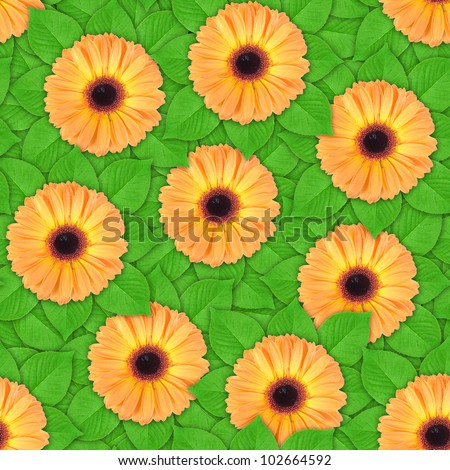 Abstract background of orange flowers and green leaf. Seamless pattern for your design. Close-up. Studio photography.