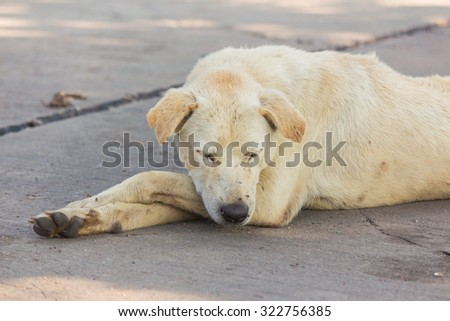 Abstract background of poor animal, Dog white plantation owner.
