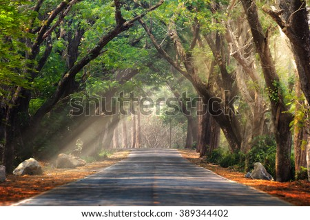 Abstract background of route and journey amidst the big tree and beautiful nature - Shutterstock ID 389344402