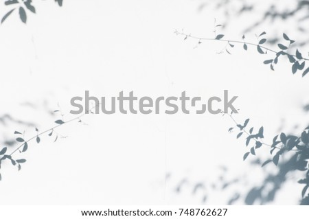 abstract background of shadows leaves on a white wall. White and Black. #748762627