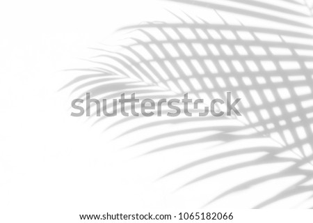 Abstract background of shadows palm leaves on a white wall. White and Black #1065182066