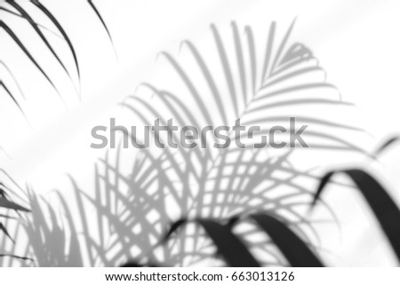 abstract background of shadows palm leaves on a white wall. White and Black #663013126
