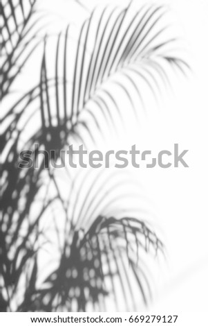 abstract background of shadows palm leaves on a white wall. White and Black. #669279127