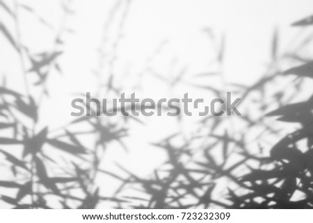 abstract background of White background with green leaf and shadow leaves. #723232309