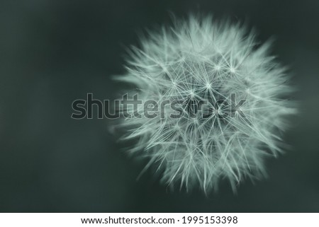 Abstract background of white dandelion on green forest background, top view. Blurred background with shallow depth of field. Concept of fragility and simplicity in nature. Foto d'archivio ©