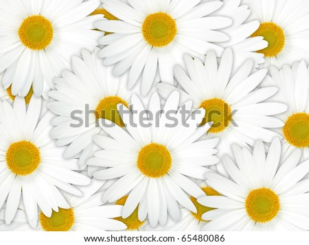 Abstract background of white flowers. Close-up. Studio photography.