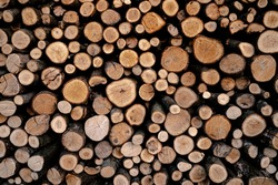 abstract, background, round firewood texture background. Pile of wood logs. Forest logging site. felled tree trunks. wood for barbecue. fireplace or boiler.