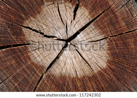 Abstract background texture of a cracked tree trunk