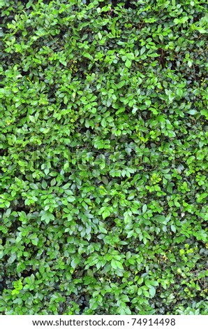 Abstract Background Texture Of A Lush Green Hedge