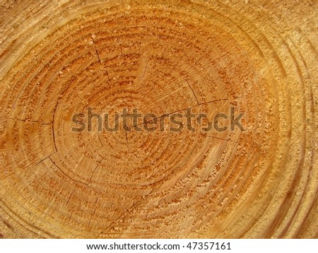 Abstract Background Texture of Some Freshy Sawn (Cut) Wood.