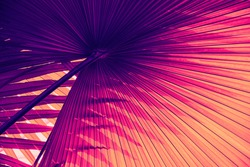 abstract background, tropical palm leaf texture in rainforest, orange purple  toned process