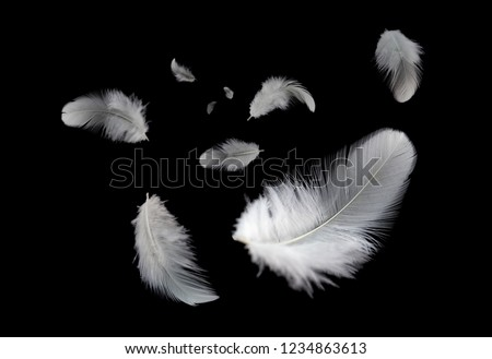 Abstract background. White feathers flying in the dark. #1234863613