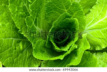Abstract background with a green salad leaves