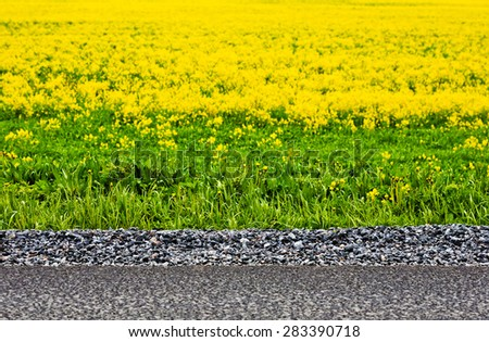 Abstract background with asphalt and yellow flower.