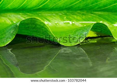 abstract background with calla leaf and reflection on water