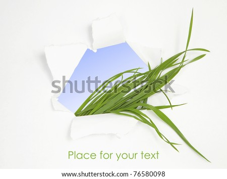 Abstract background with green grass