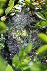 Abstract background with plants, leaves and cobwebs. Forest macro photography. Close-up photo of a spiderweb. Copyspace in the center.
