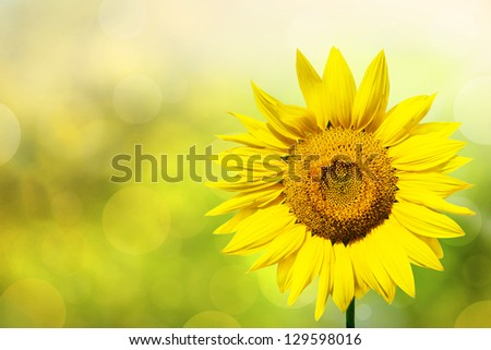 Abstract background with sunflowers