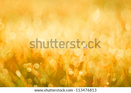 abstract background yellow bokeh circles