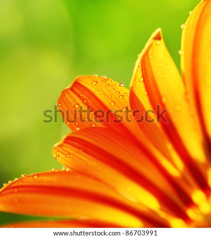 Abstract beautiful flower, colorful floral background , wet yellow petals border, daisy plant with bokeh ,nature macro details - stock photo