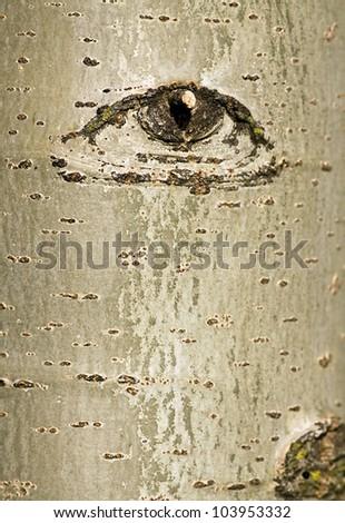 Abstract beech tree bark with eye design