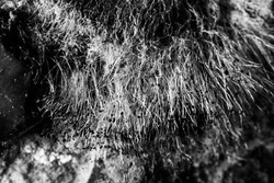 Abstract black and white background with a mold macro