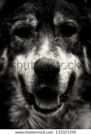 abstract black and white high contrasted dog portrait