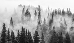 Abstract black and white landscape with fog in the forest