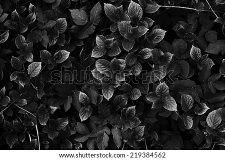 abstract black and white leaves & branch texture